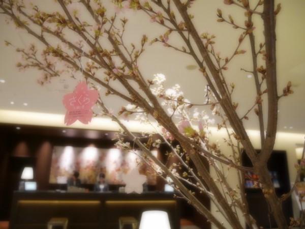 【福岡・ホテルフォルツァ博多】さくらに願いを…一足早く春が訪れました